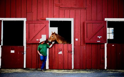 Equine Major Medical Insurance