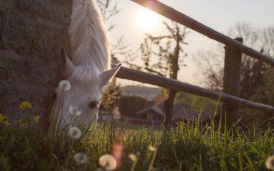 Equine Mortality Horse Insurance