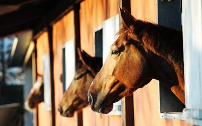 Equine Business Liability Insurance