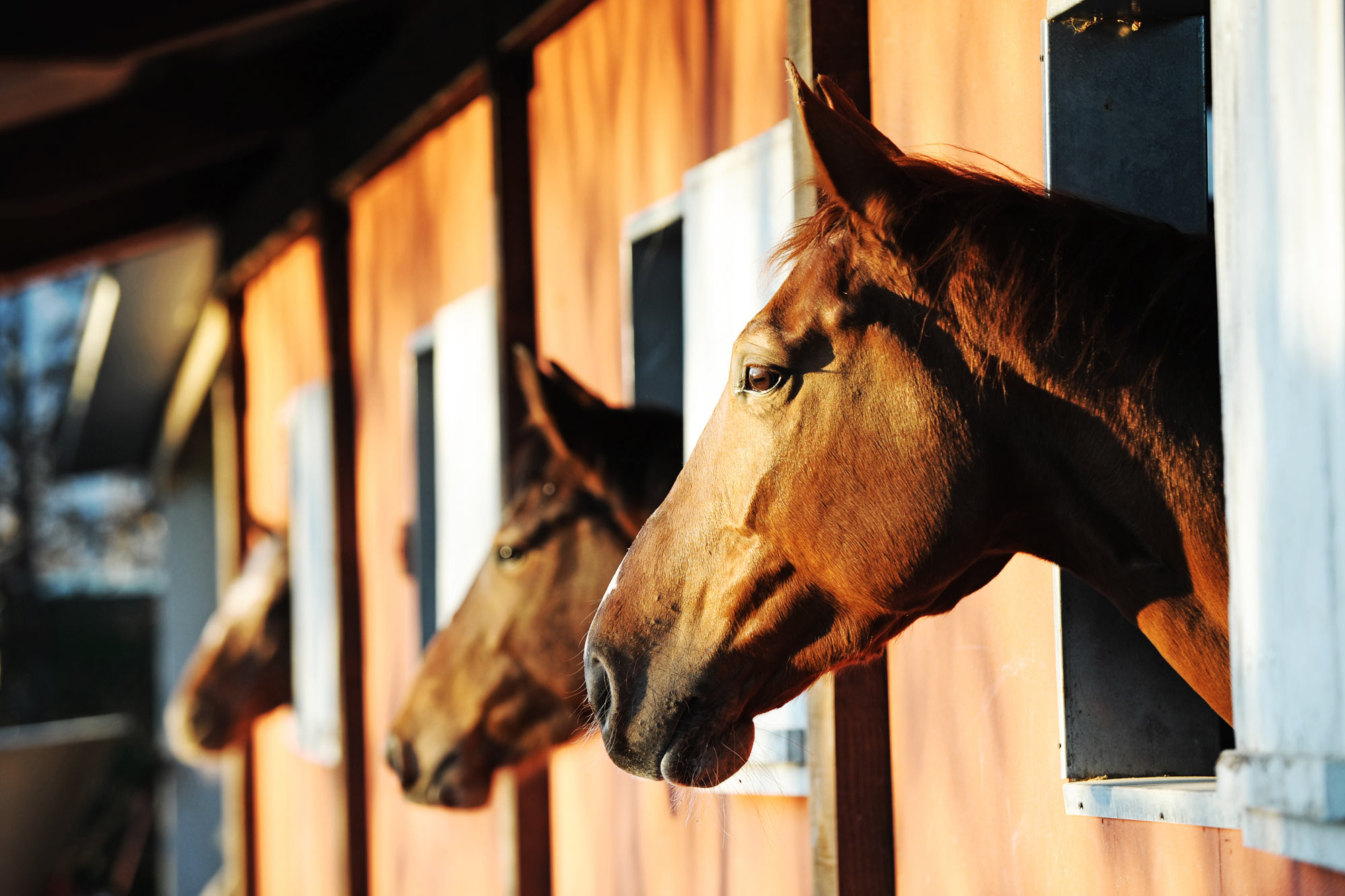 Equine Business Liability Insurance  Kay Cassell Equine Insurance