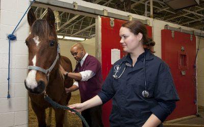 Equine Colic Insurance