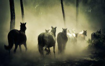 Equine Theft Insurance