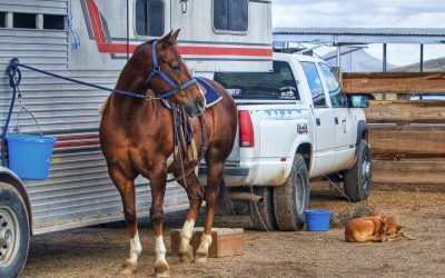 Horse Transportation Insurance