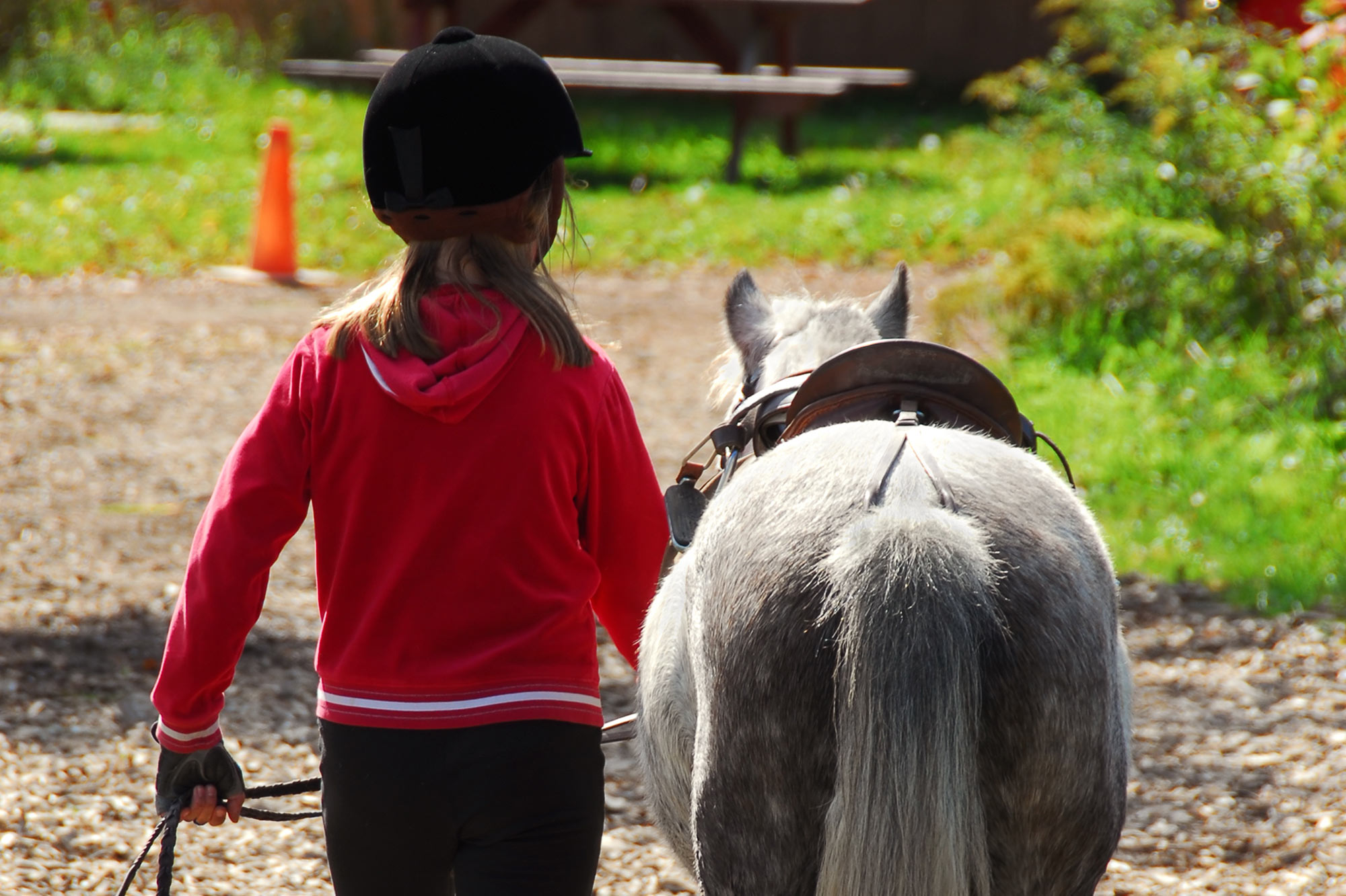 Pony Party Insurance Horse Camp Liability | Kay Cassell