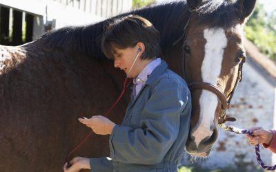 Short Term Horse Insurance